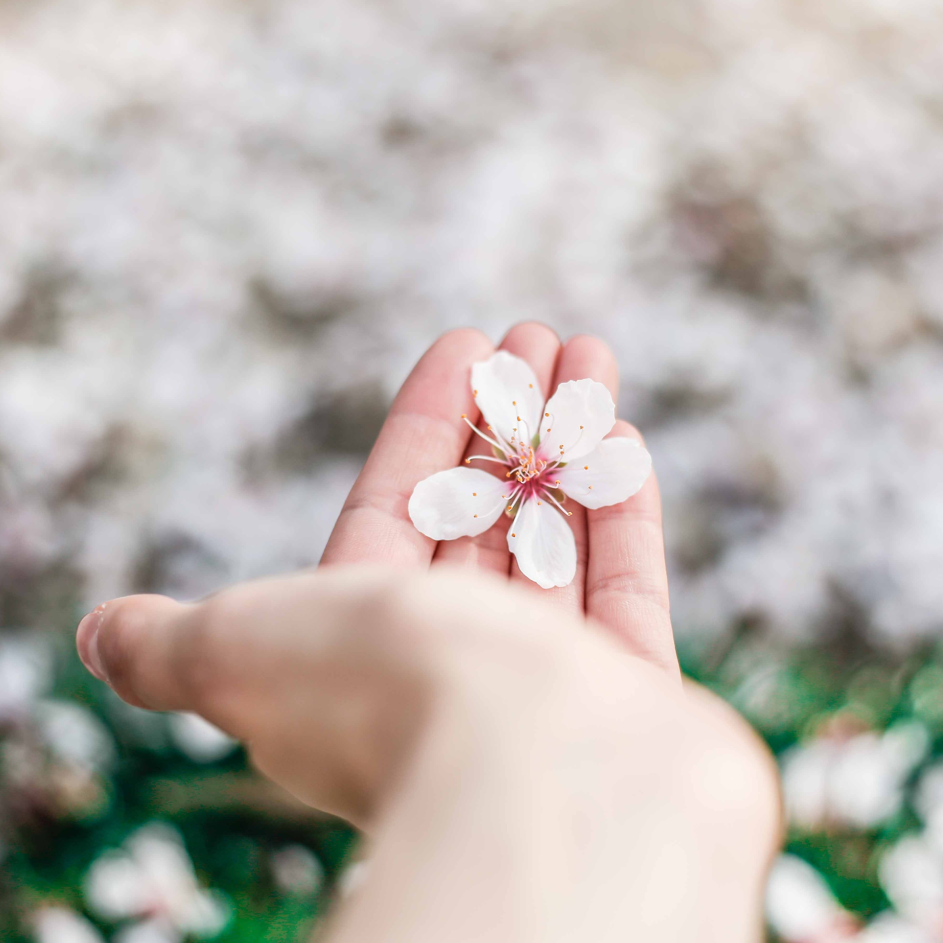 Hand softly holding a flower